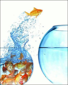 "alt=""Goldfish leaping from a crowded bowl into a new, larger bowl"""